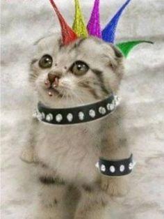 Punk Cat