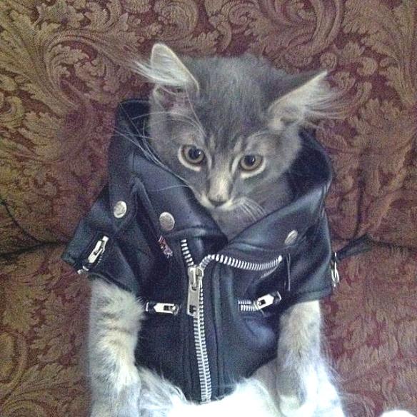 Punk Kitten