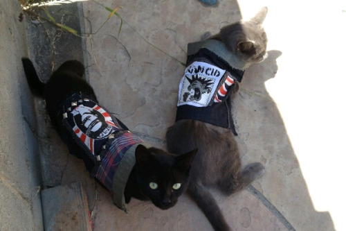 Punk Rock Cats